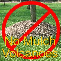 No Mulch Volcanoes